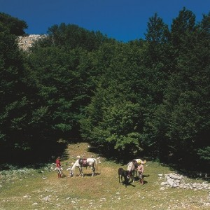 agriturismo sicilia maneggio cavalli